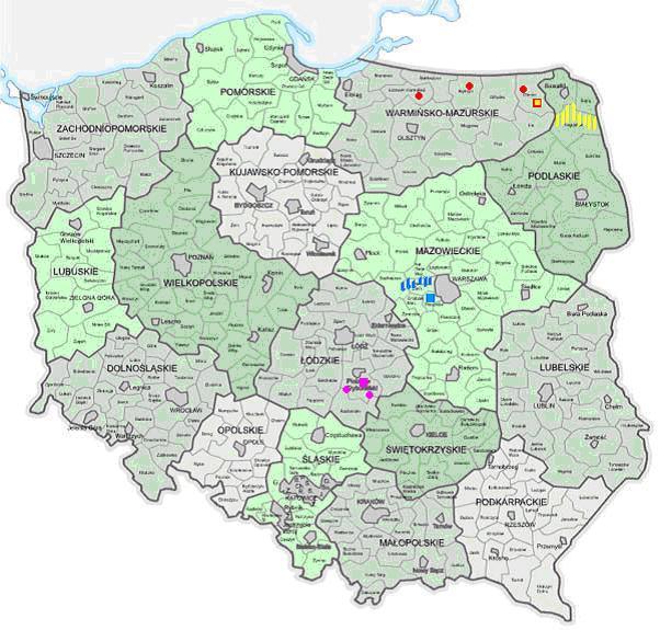 Polskie linie pszczoły środkowoeuropejskiej